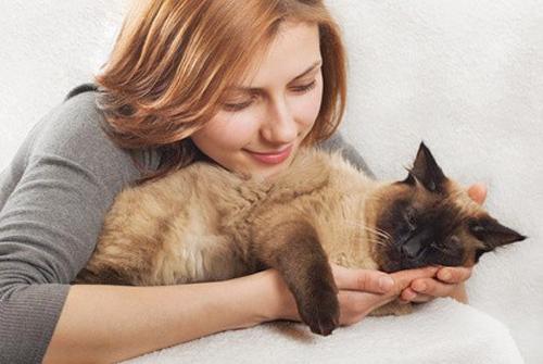 Une femme vit avec plus de 1100 chats